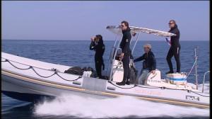 Vies croisees Baleins